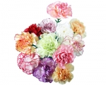 Bulk Carnations