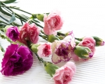 Bulk Mini Carnations