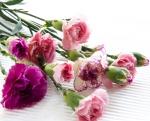 Bulk Mini Carnations